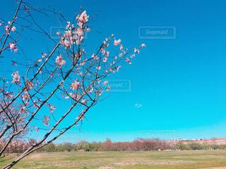 風景の写真・画像素材[384771]