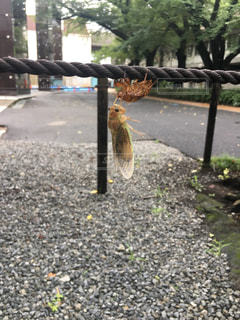 道路の脇に座っている鳥 - No.706121