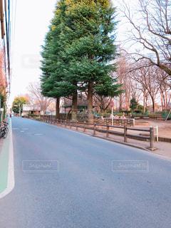 道の端に木の写真・画像素材[1054472]