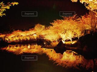 ライトアップの写真・画像素材[363463]