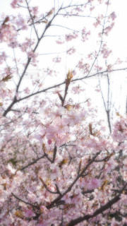 No.389276 桜