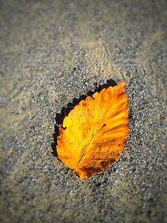 落ち葉の写真・画像素材[900415]
