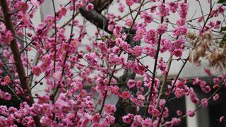 春の花の写真・画像素材[1022489]