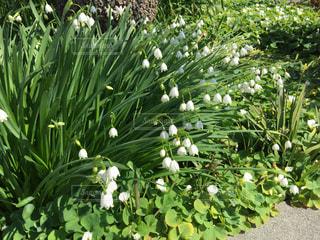 庭の植物の写真・画像素材[1028219]
