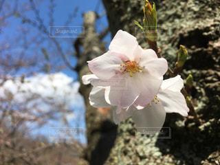 春の写真・画像素材[414792]