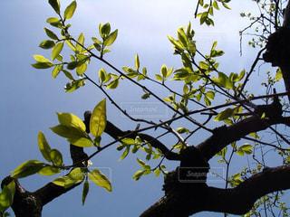 春 - No.363869