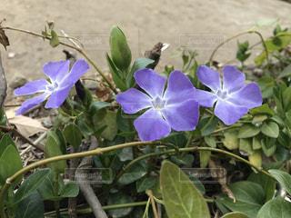 花の写真・画像素材[363001]