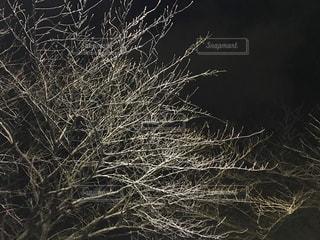 桜の写真・画像素材[385878]