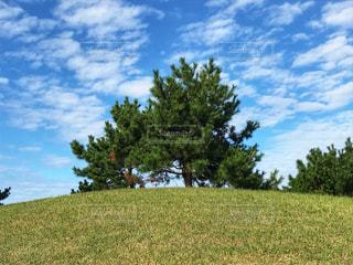 丘の上にの写真・画像素材[1519302]