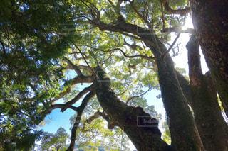 森林の写真・画像素材[363393]
