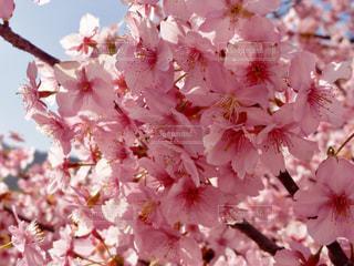 花の写真・画像素材[363411]
