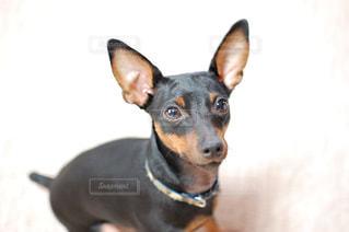 犬の写真・画像素材[374669]
