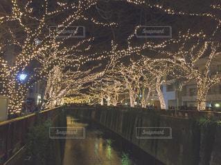 夜景の写真・画像素材[360131]