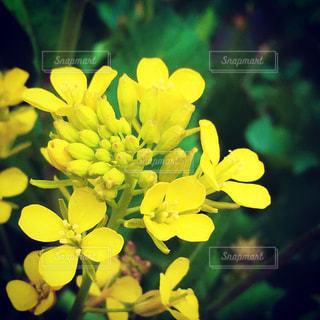 花の写真・画像素材[360279]