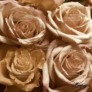 花の写真・画像素材[361800]