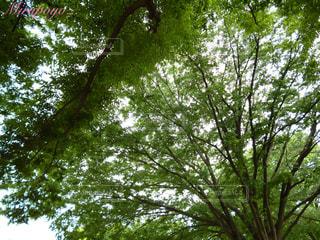 森林の写真・画像素材[361877]