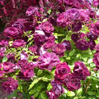 花の写真・画像素材[361880]