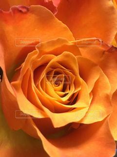 花束の写真・画像素材[362637]