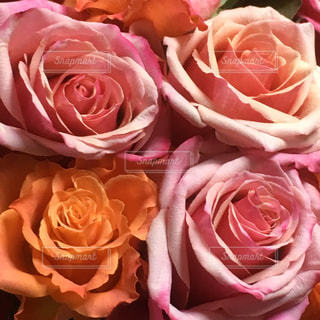 花束の写真・画像素材[362638]