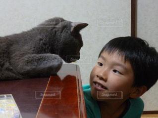 猫の写真・画像素材[365785]