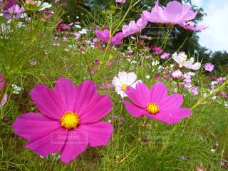 花の写真・画像素材[365786]
