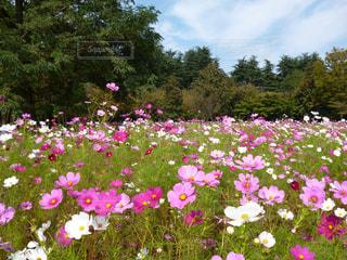 花の写真・画像素材[365787]