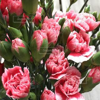 花の写真・画像素材[383644]