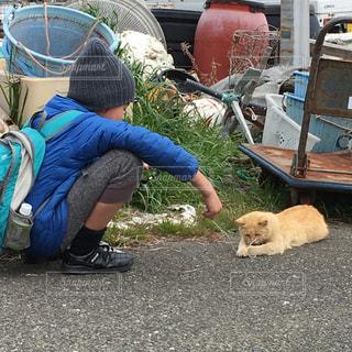 猫島の写真・画像素材[405923]