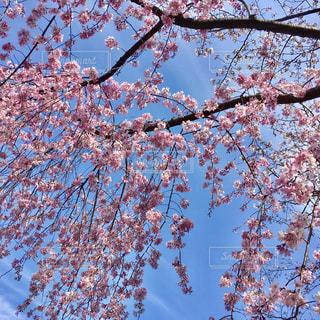 花の写真・画像素材[416681]