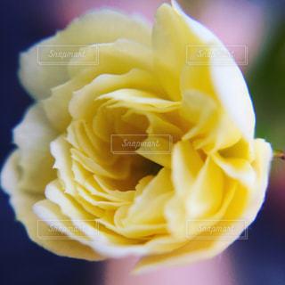 花の写真・画像素材[433136]