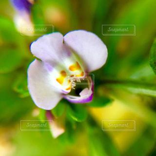 花の写真・画像素材[470968]