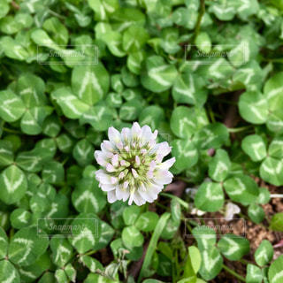 花の写真・画像素材[478814]
