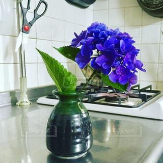 花の写真・画像素材[568021]