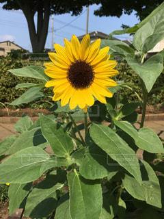 花の写真・画像素材[602823]