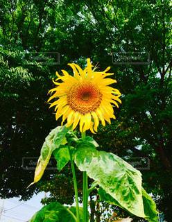 花の写真・画像素材[617827]