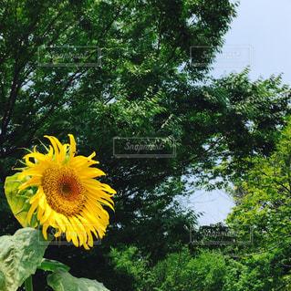花の写真・画像素材[617828]