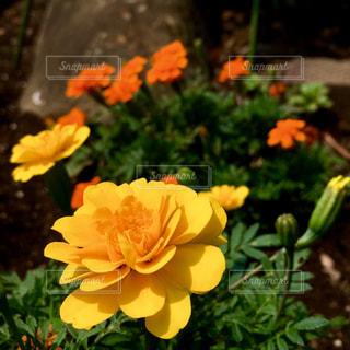 花の写真・画像素材[618405]