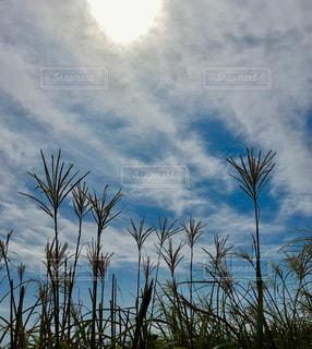 秋の空の写真・画像素材[780954]