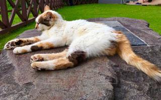 おでかけ先で見かけた猫ちゃん。の写真・画像素材[821150]