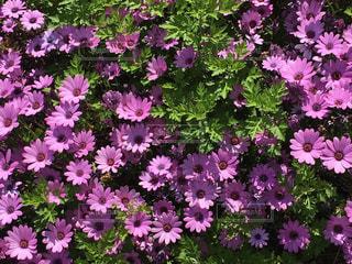 ピンクの花。の写真・画像素材[1175916]
