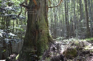 森林 - No.34826