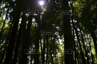 森林 - No.34827
