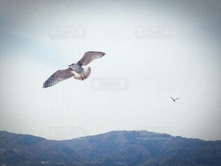 鳥の写真・画像素材[360738]