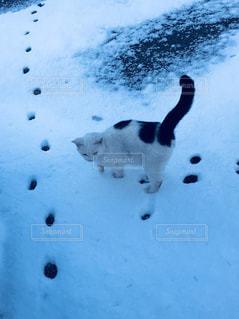 猫も雪が好き! - No.897615
