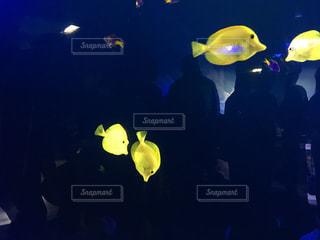 魚の写真・画像素材[397888]
