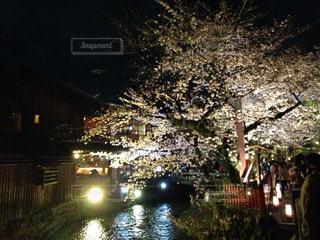 桜の写真・画像素材[373653]