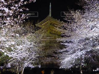 桜の写真・画像素材[381678]