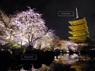 桜の写真・画像素材[381679]