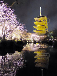 桜の写真・画像素材[381680]