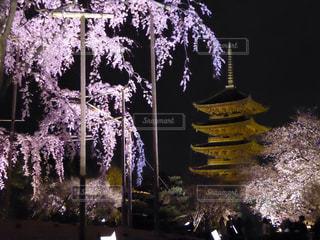 桜の写真・画像素材[381681]